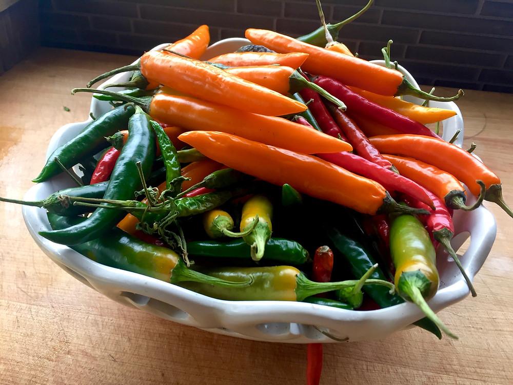 Thai chilis from my garden