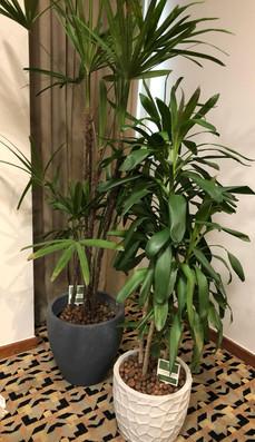 aluguel de plantas de ornamentação
