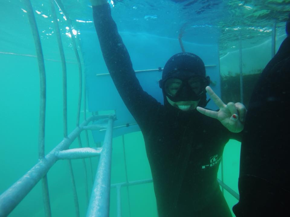 shark diving