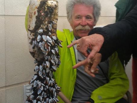Goose barnacles at Rota Vicentina