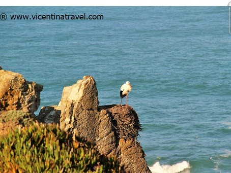 Vicentina White Storks - Alentejo Walking Holidays