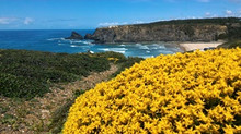 Flower Time - Walk along Rota Vicentina