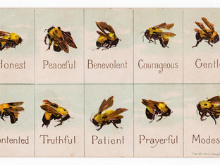 A Bee's Life... cycle #2