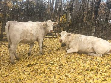 cowspasture.jpg