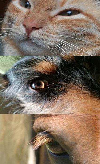 Tierkommunikation-Augen.jpg