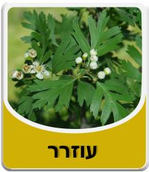 Hawthorn/Crataegus - leaves 50 grams