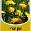 Thumbnail: Dandelion leaves 50 g