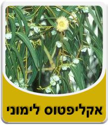 Lemon Eucalyptus Oil 10 ml