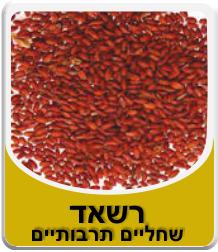 זרעי רשאד - שחליים תרבותיים 100 גרם