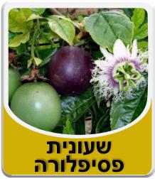 Passiflora 50 grm