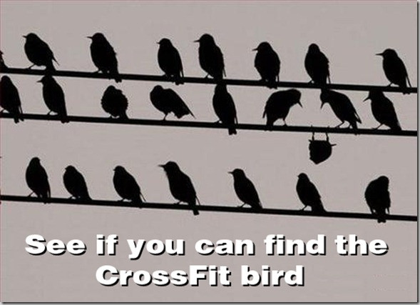 crossfit-bird_thumb.jpg