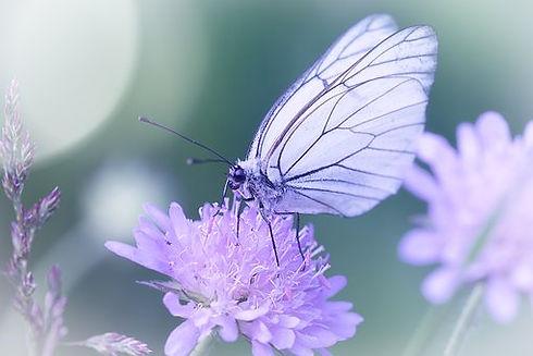 butterfly-3491446__340.jpg