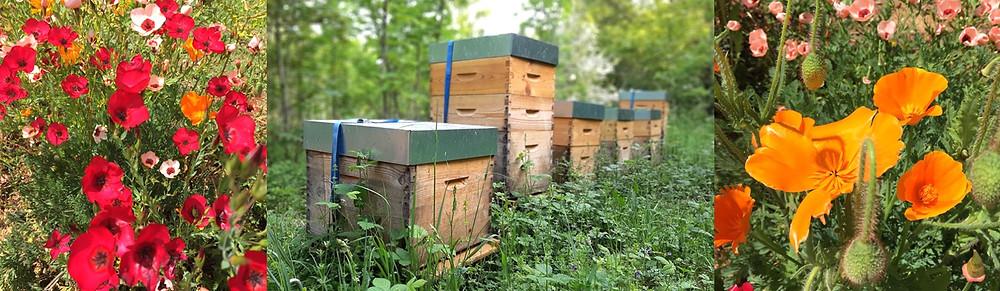 apimelis miel abeille ruche apiculture printemps fleur