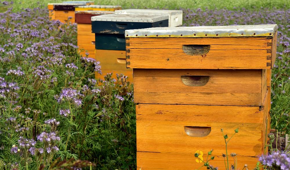 apimelis miel abeille ruche apiculture rucher