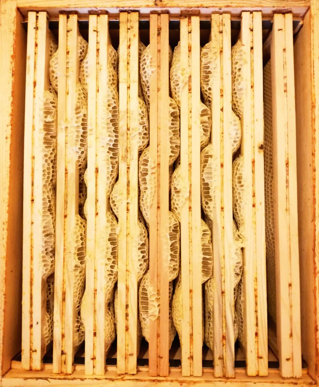 apimelis miel abeille ruche apiculture cadre hausse cire