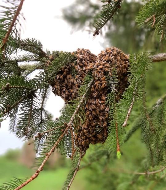 apimelis miel abeille ruche apiculture essaim colonie île-de-france