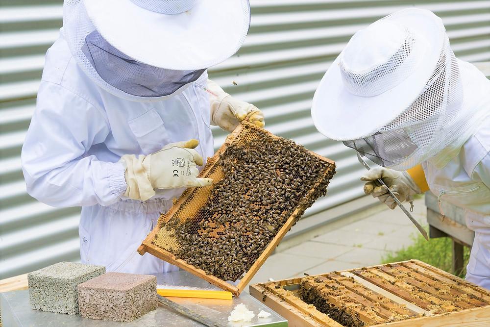 apimelis miel abeille ruche apiculture atelier animation entreprise