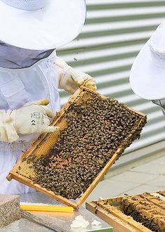 Atelier découverte : Dans la peau d'un apiculteur (-12 ans)
