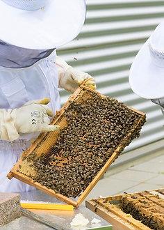 Atelier découverte : Dans la peau d'un apiculteur (+12 ans)