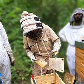 partenaire abeilles parrain ruche apiculteur local