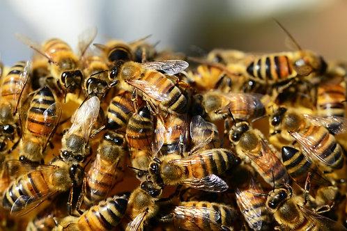 10 000 abeilles parrainées pour 10 pots personnalisés (2,5kg)