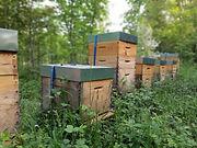 partenaire abeilles parrain ruche