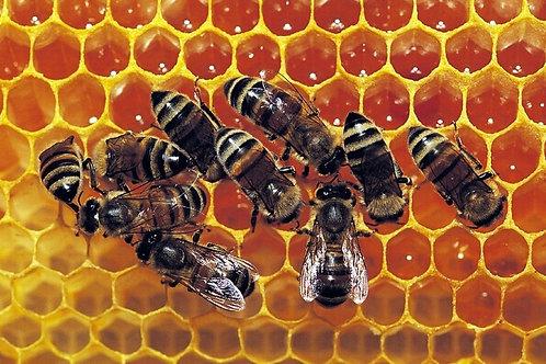 5 000 abeilles parrainées pour 5 pots personnalisés (1,25kg)