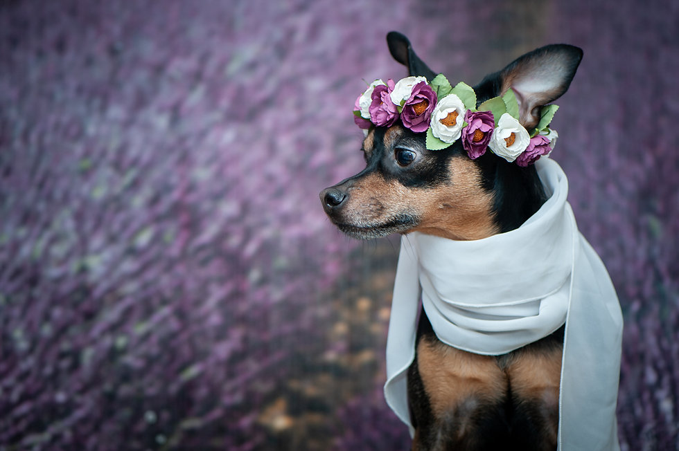 Funny puppy in a wreath of flowers  on t
