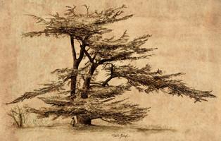cedar tree sig 2 textured back smaller.j