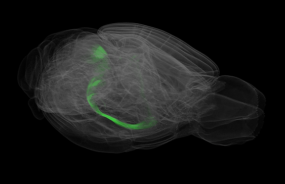3D mouse brain technology used at Allen and RIKEN
