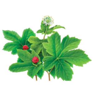 GOLDENSEAL FEEL WHEALTHY.png