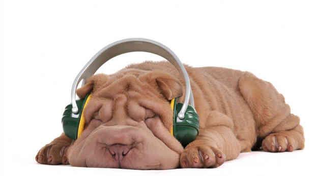 Sleepy Puppy in green headphones