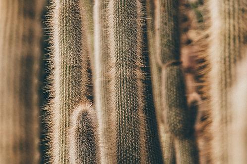 cacti pattern 01