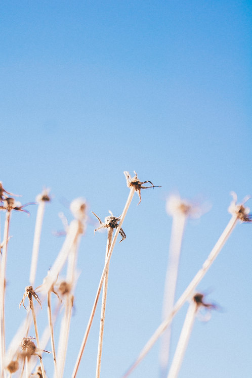 algarve flora