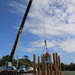 Pine Forest Installion Day