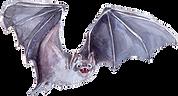 Morcego.png