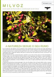 Newsletter Dezembro.PNG