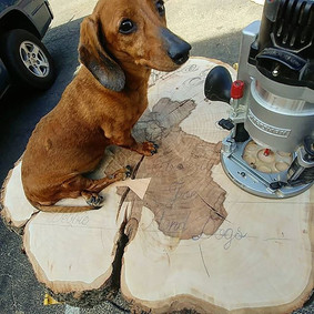 _Wiener dog for size__._._._.jpg