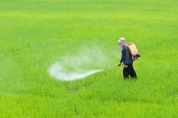 Traitements phytosanitaires