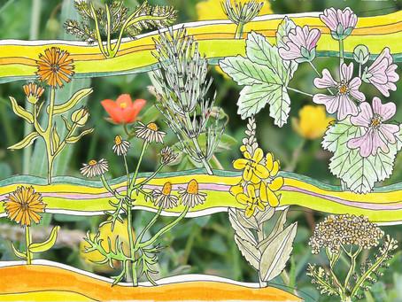 herbal medicine: beginnings