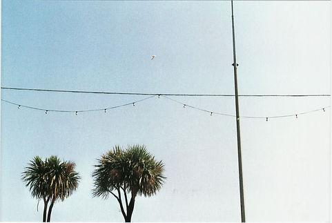 treesandwire.jpg