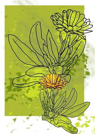 marigold3_orig.jpg