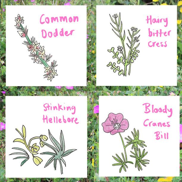 4 RUDE FLOWERS BOOK.jpg