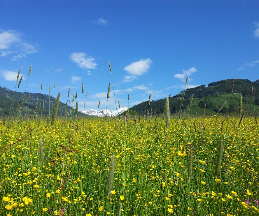 Shiatsu Praxis Thörl - Blick in die Berge