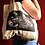 Thumbnail: Tote of Fishes