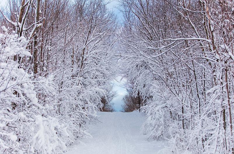 Winter - Medium Res.jpg