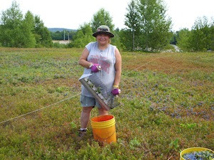 2010 blueberry raking plus 158.jpg