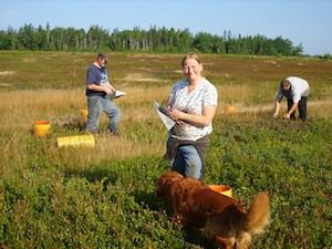 2010 blueberry raking plus 131.jpg