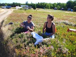 2010 blueberry raking plus 137.jpg
