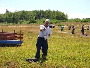 2010 blueberry raking plus 175.jpg